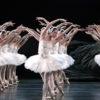 chem proslavilsya gonkongskij balet i pochemu ego nazyvajut odnoj iz samyh unikalnyh trupp v mire