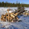 strategiya vyzhivaniya vesnoj v lesu 1